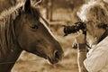 Senior man photographing closeup horses face Royalty Free Stock Photo