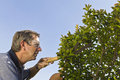 Senior Man Pruning Tree Royalty Free Stock Images