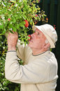 Senior man smelling the roses Stock Images