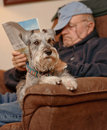 Senior Reading and Relaxing with Dog Stock Photography