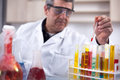 Senior scientist researching in laboratory Royalty Free Stock Photo