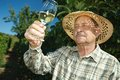 Senior winemaker testing wine Royalty Free Stock Photos