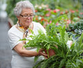 Senior woman doing some gardening Royalty Free Stock Photo