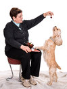 Senior woman feeding spaniel on a white background Stock Photos