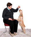 Senior woman feeding spaniel on a white background Royalty Free Stock Photography