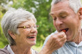 Senior woman feeding strawberry to man closeup of a women men at the park Royalty Free Stock Images