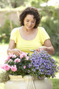 Senior Woman Gardening Royalty Free Stock Image
