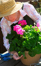 Senior woman gardening Royalty Free Stock Photos