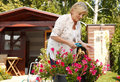 Senior woman gardening Royalty Free Stock Photo