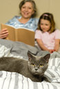 Senior woman and granddaughter reading with cat women lying in bed Stock Photo