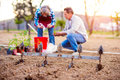 Senior woman and man plowing and planting seeds, garden Royalty Free Stock Photo