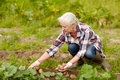 Senior woman planting potatoes at garden or farm