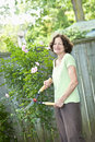 Senior woman pruning rose bush happy gardening and with clippers Royalty Free Stock Photo