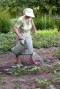 Senior woman working in garden Royalty Free Stock Photo