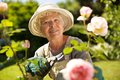 Senior woman working in the garden with a pruning shears looking at you smiling her old gardening on a sunny day Royalty Free Stock Image