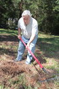 Senior years forever young old raking pine needles Stock Image