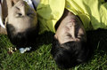 Seniors couple lying on grass outdoor Stock Photos