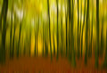 A sense of fall these vivid colors were captured with intentional blur to convey movement through the forest Stock Photo