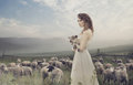 Sensual lady among sheeps young Stock Photos