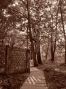 Sepia park landscape Royalty Free Stock Photo