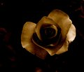 Sepia rose with and unsaturated colors the veins look lovely Royalty Free Stock Photos