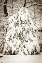 Sepia Snowfall Royalty Free Stock Images