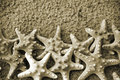 Sepia Starfish Royalty Free Stock Photo