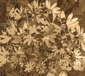 Sepia Textured Daisy Wallpaper Royalty Free Stock Photography