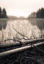 Sepia toned lake landscape with dead trees lying Royalty Free Stock Photo