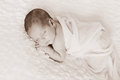 Sepia toned newborn baby boy portrait a image of a sleeping week old wrapped in white gauzy fabric and sleeping on a white billowy Royalty Free Stock Photography