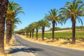 Seppeltsfield Road - Barossa Valley Royalty Free Stock Photo