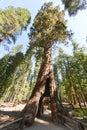 Sequoia Gate in Mariposa Grove, Yosemite National Park Royalty Free Stock Photo