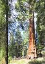 Sequoia Giant Forest museum trailhead, USA Royalty Free Stock Photo