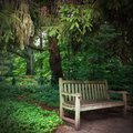 Serene setting park bench in the woods of a surrounded with trees Royalty Free Stock Photo