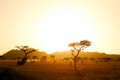 Serengeti savannah in morning light sun rise tanzania Stock Photos