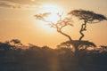 Serengeti sunset acacia tree at Royalty Free Stock Photography