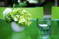 Serenity green evening in the garden table spring color Stock Image