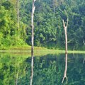 Serenity river kho sok thailand mirror Stock Images