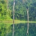 Serenity river kho sok thailand mirror Stock Images