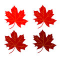 Series maple leaf red vegetable illustration Stock Photos