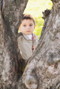Serious boy behind tree Royalty Free Stock Image