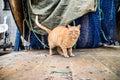 Serious cat street looking at camera Stock Image