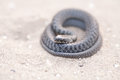 Serpent on sand in coils Stock Photo