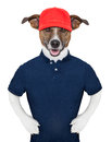 Service dog wearing a blue polo and a red cap Royalty Free Stock Images