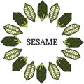 Sesame, Round frame in color 1