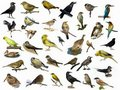 Set of 35 (different) photographs of birds Stock Image
