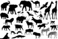 Set of africa animales Stock Photography