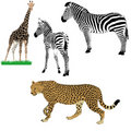 Set of  African animals Stock Photography