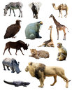 Set of african animals Royalty Free Stock Photo