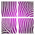 Set of animal pattern. Imitation print of skin of zebra. Black purple stripes on white background. Royalty Free Stock Photo